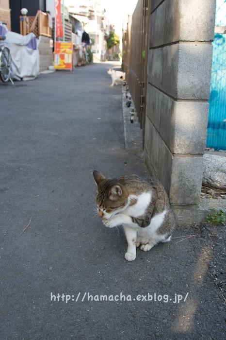 Cats at Enoshima_c0158775_18441113.jpg