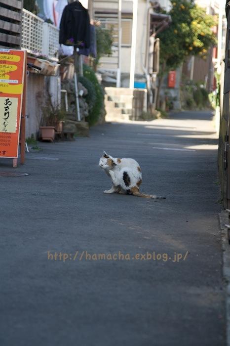 Cats at Enoshima_c0158775_18442412.jpg
