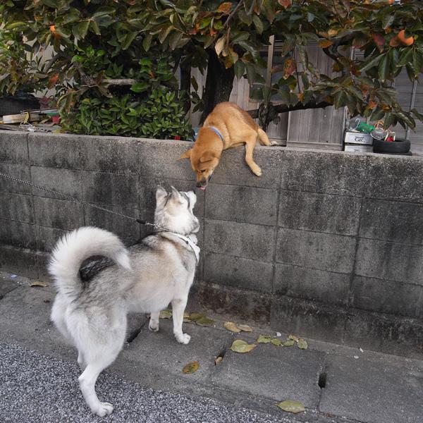 11月23日 おへんろ13日め by GX100_c0049299_14104585.jpg