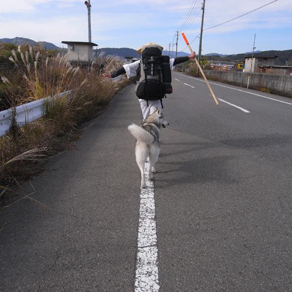 11月23日 おへんろ13日め by GX100_c0049299_14114732.jpg