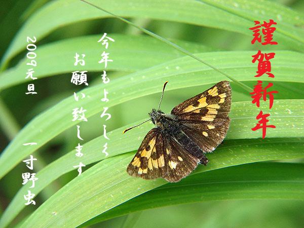 b0033112_0381031.jpg