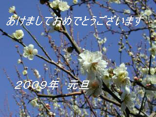 a0075819_2153411.jpg