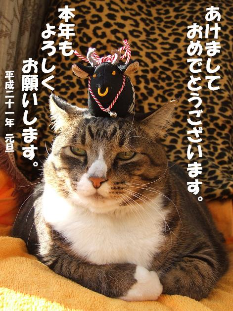 謹賀新年!_b0089338_14594672.jpg
