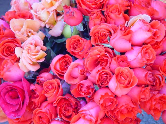 薔薇の花言葉は・・・_c0190938_19254262.jpg