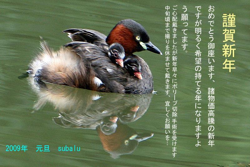 e0066638_11874.jpg