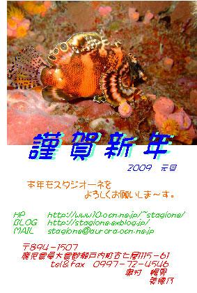 謹賀新年_b0033573_21543733.jpg