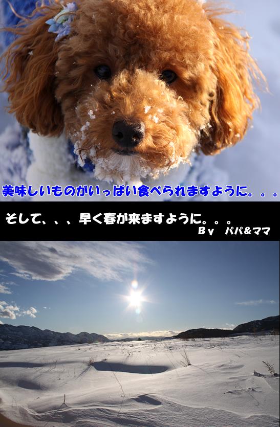 c0164491_8444135.jpg