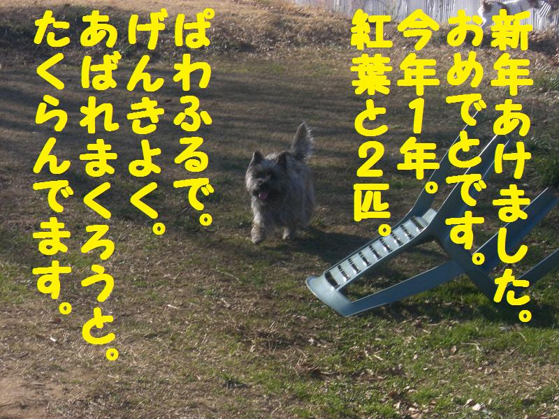 d0127716_1605544.jpg