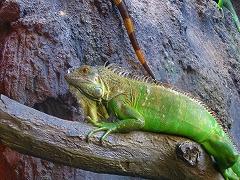 オジサンズ in 動物園_a0036808_18543571.jpg