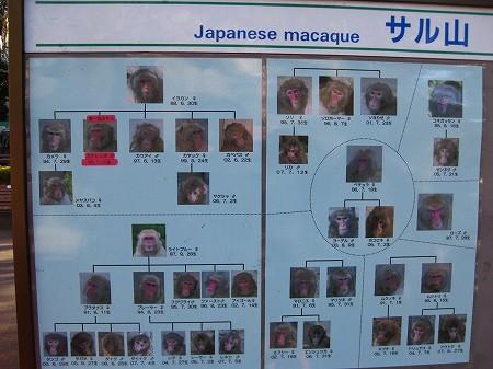 オジサンズ in 動物園_a0036808_19101150.jpg