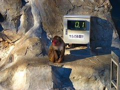 オジサンズ in 動物園_a0036808_1935932.jpg