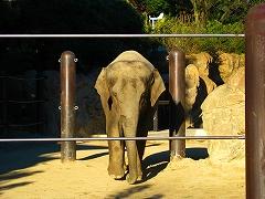 オジサンズ in 動物園_a0036808_23522515.jpg