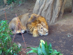 オジサンズ in 動物園_a0036808_23532349.jpg