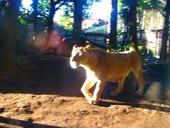 オジサンズ in 動物園_a0036808_2353334.jpg