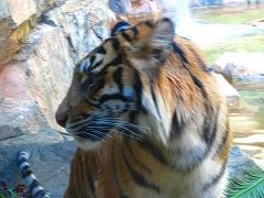 オジサンズ in 動物園_a0036808_23542240.jpg