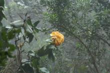 再び キナバルへ_c0177135_1511562.jpg