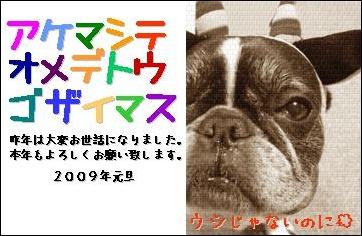 b0033186_8392531.jpg