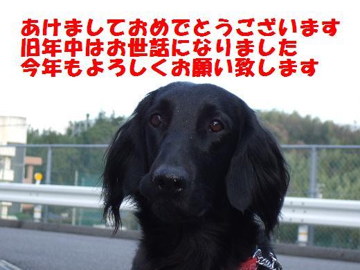 d0070289_2004076.jpg