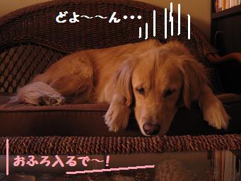 12月30日 お風呂入るで~_e0136815_12363584.jpg