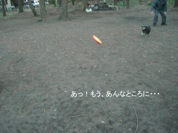 f0197317_7514555.jpg