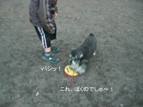 f0197317_834627.jpg