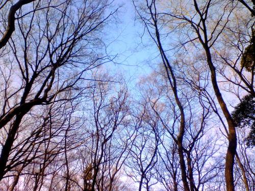 「冬の散歩道」_b0133126_16335036.jpg