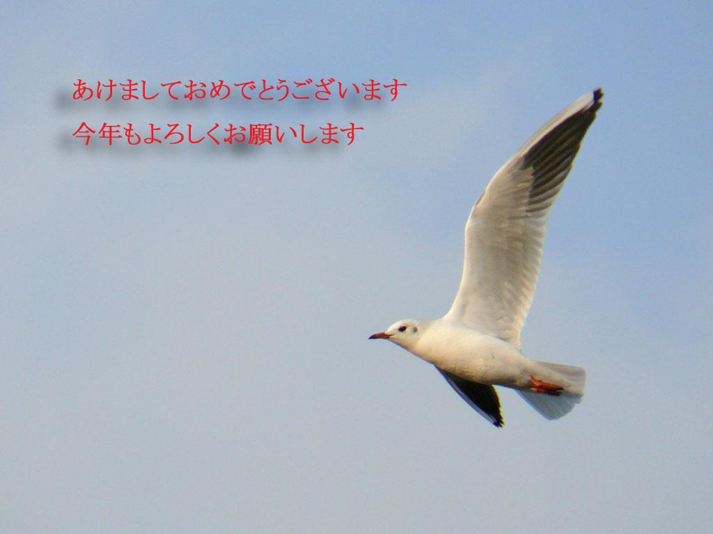 羽ばたく ユリカモメ_e0088233_1453032.jpg