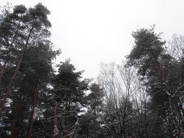 白い安曇野_a0014840_048178.jpg