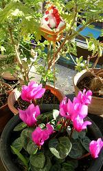 ベランダの花たち_f0139963_7512233.jpg