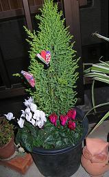 ベランダの花たち_f0139963_7542334.jpg