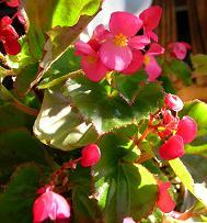 ベランダの花たち_f0139963_757297.jpg