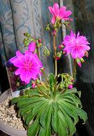 ベランダの花たち_f0139963_7574429.jpg
