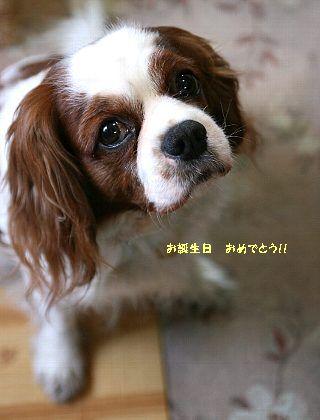 b0021297_1630281.jpg