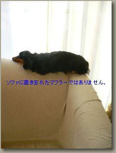 b0151505_1892991.jpg