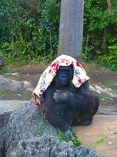 オジサンズ in 動物園_a0036808_1251021.jpg