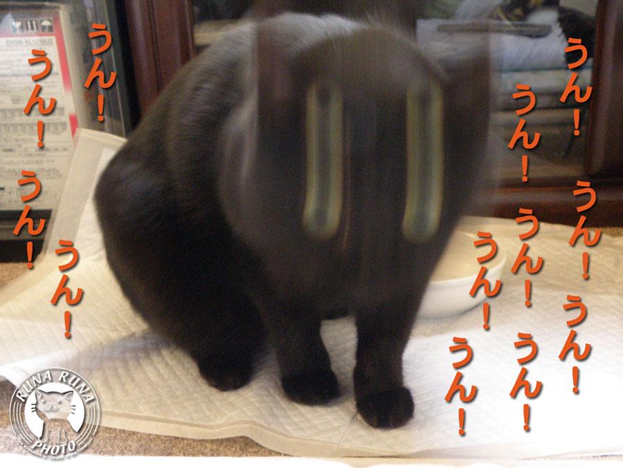 b0118920_21434353.jpg