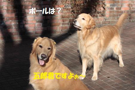 f0114128_1049405.jpg