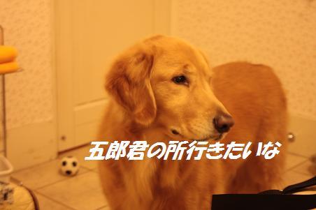 f0114128_1546249.jpg