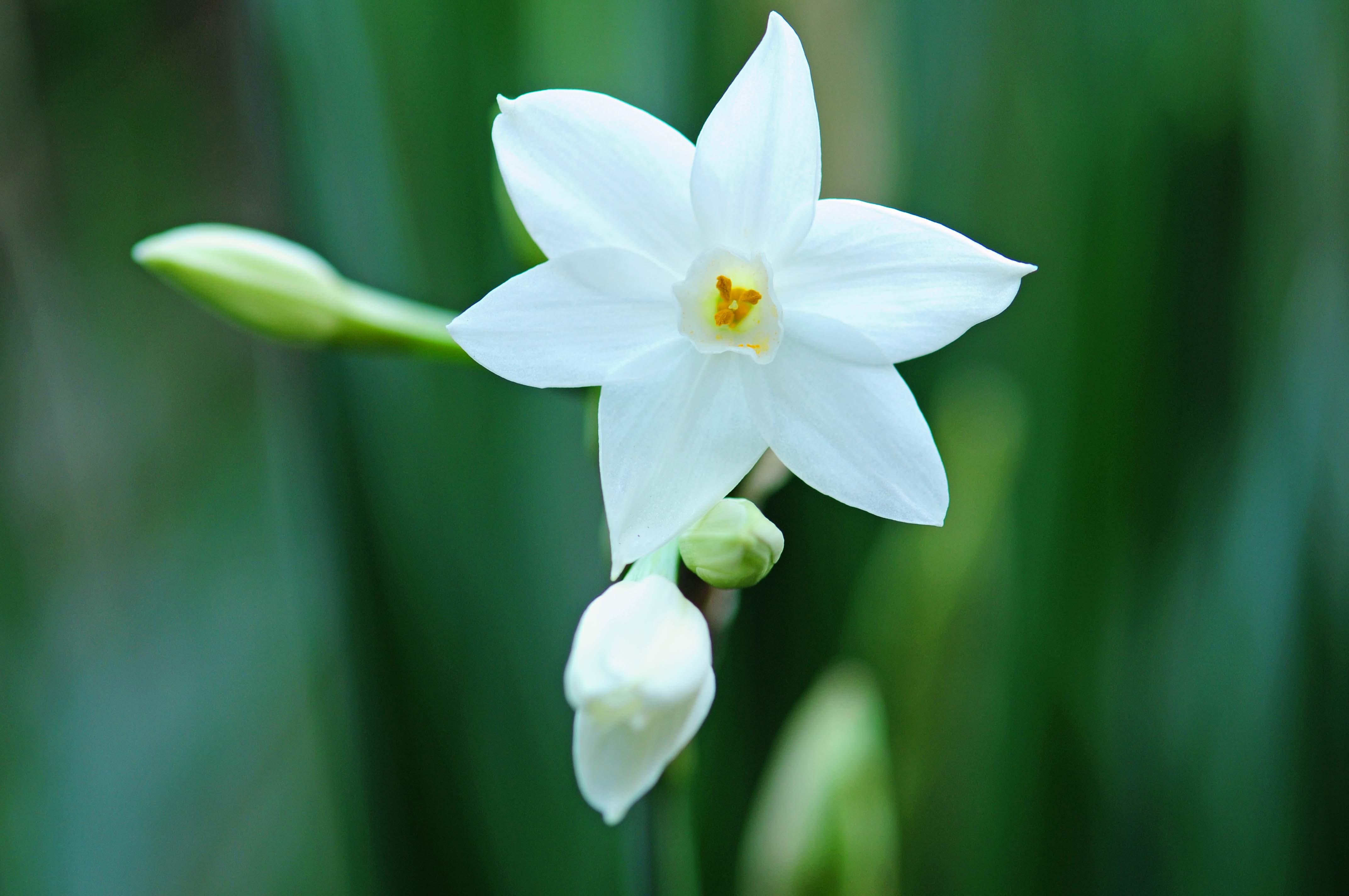 冬に咲く花_e0157647_7124689.jpg