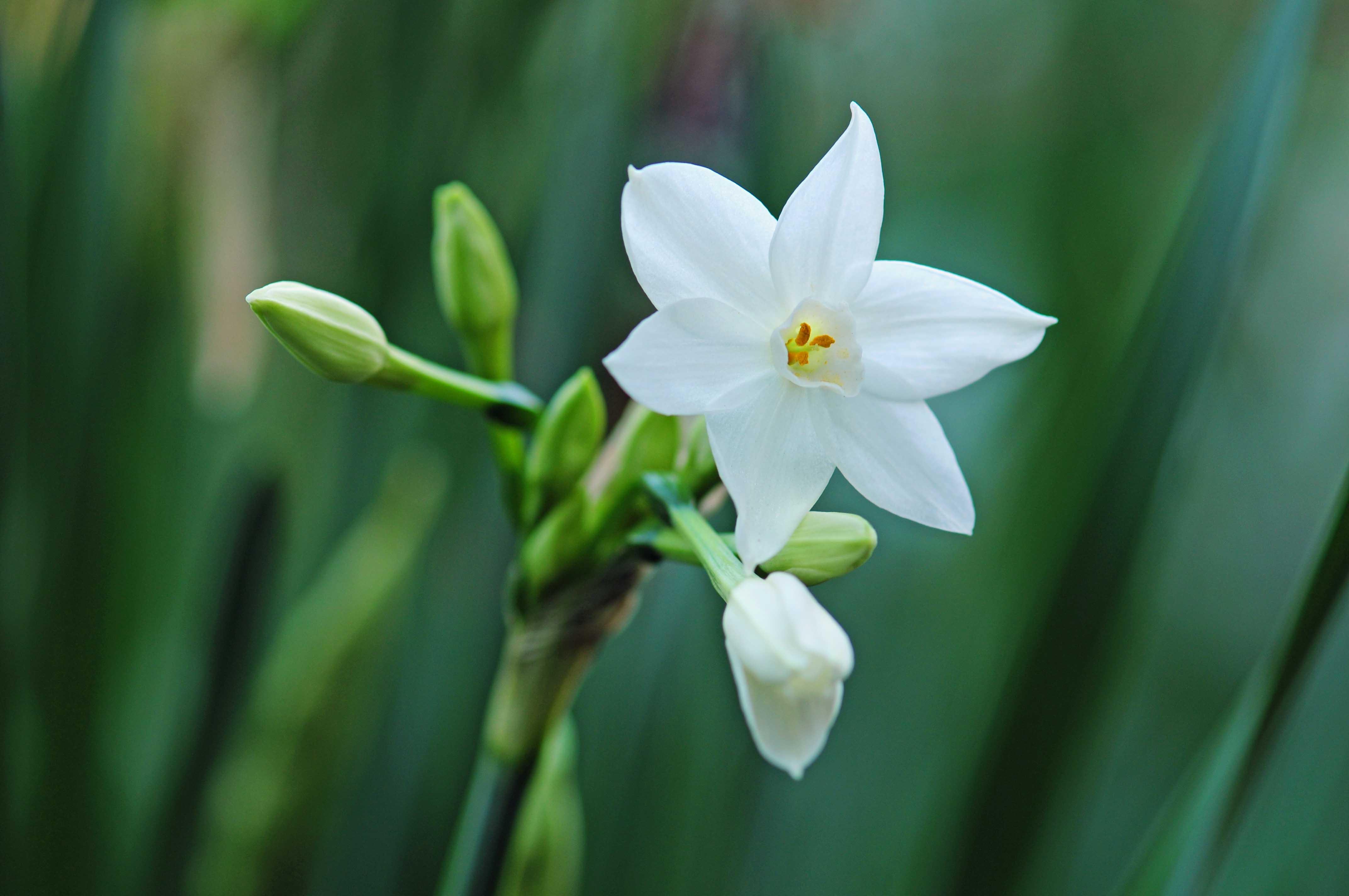 冬に咲く花_e0157647_713355.jpg