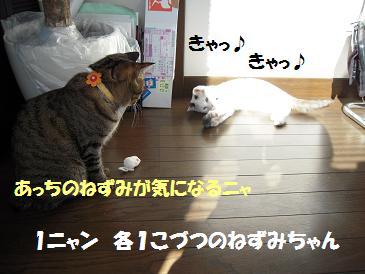 c0139488_15423896.jpg