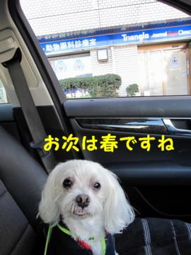 f0145192_20341.jpg