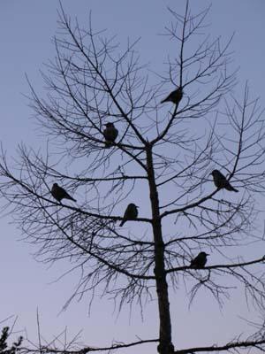 小鳥達にはヘルシーメニュー_e0120896_6564791.jpg