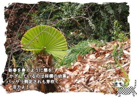 f0137096_12423934.jpg