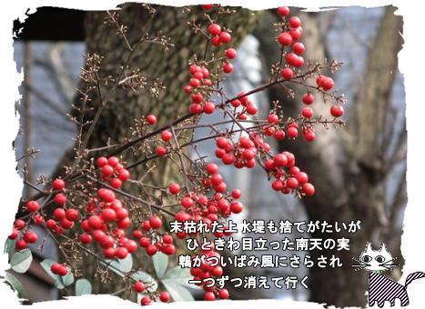 f0137096_1243730.jpg