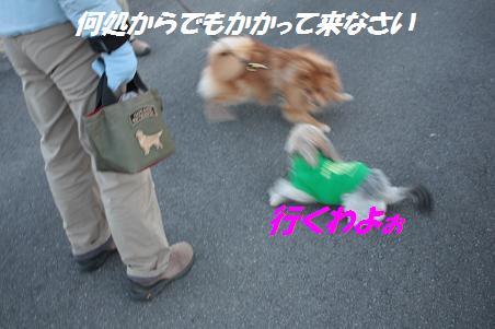 f0114128_16163215.jpg