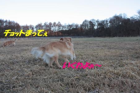 f0114128_16211276.jpg
