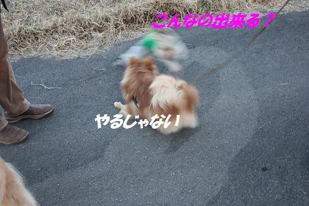 f0114128_16285866.jpg
