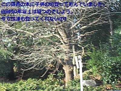 b0148945_19505632.jpg