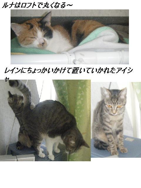 b0112380_20521577.jpg